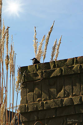 Photograph - Starling Sunbathing 493 by Ericamaxine Price