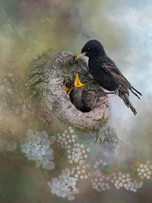 Photograph - Starling Wisdom by Robin-Lee Vieira
