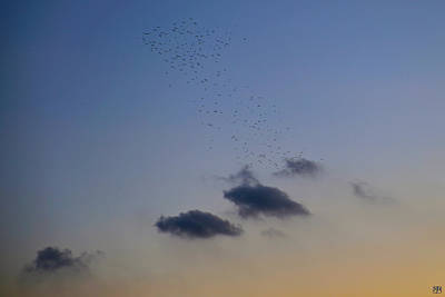 Photograph - Starlings Flying Into The Sunset by John Meader