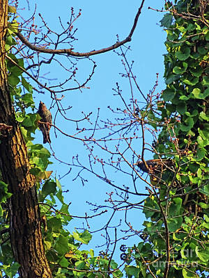 Photograph - Starlings by Jasna Dragun