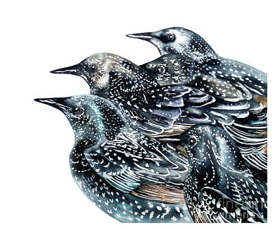 Starlings Painting - Starlings by Marie Burke