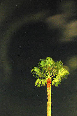Photograph - Starlit Palm by Richard Gibb