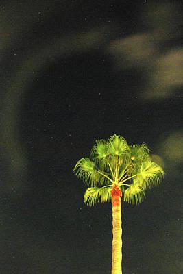 Photograph - Starlit Palm by Richard Gibb
