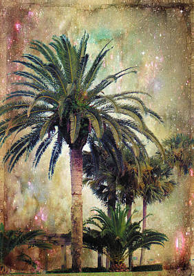 Palm Tree Photograph - Starry Evening In St. Augustine by Jan Amiss Photography