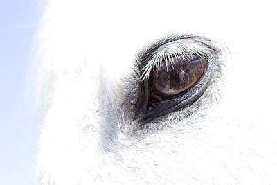 Photograph - Starry Eyed Horse by  Tina McGinley