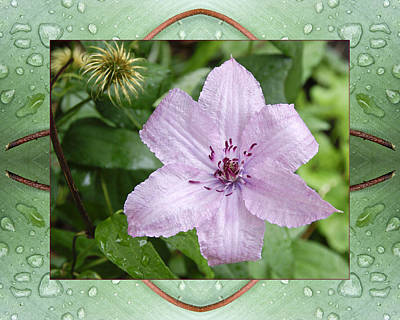 Photograph - Starry Mauve by Bell And Todd