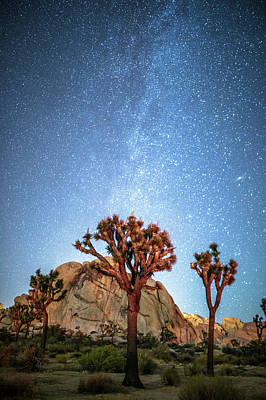 Photograph - Starry Night by Davorin Mance