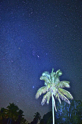Photograph - Starry Palm by Don Mercer