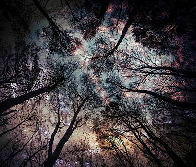 Photograph - Starry Sky In The Forest by Marianna Mills