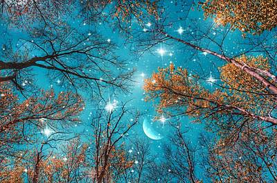 Royalty-Free and Rights-Managed Images - Starry Sky in the Woods  by Marianna Mills