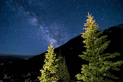 Stars Above Trees Art Print by Michael J Bauer