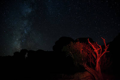 Photograph - Stars And Juniper by Kunal Mehra