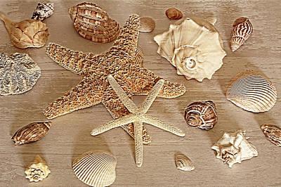 Photograph - Stars And Shells by Angie Tirado