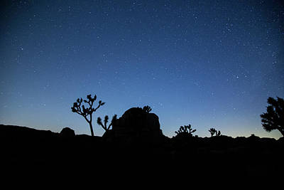 Photograph - Stars And Trees by Kunal Mehra