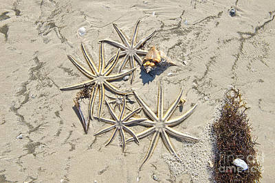 Photograph - Stars From The Sea by David Arment