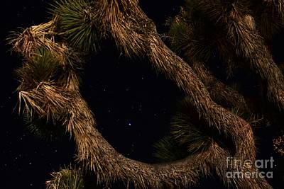 Photograph - Stars In Between by Angela J Wright