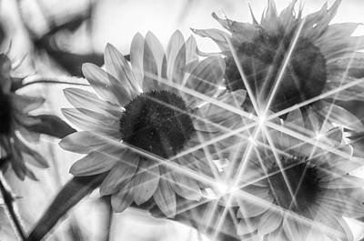 The Playroom - Stars in Sunflowers Bw by John Diebolt