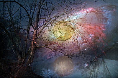 Photograph - Stars In The Forest by Debra and Dave Vanderlaan