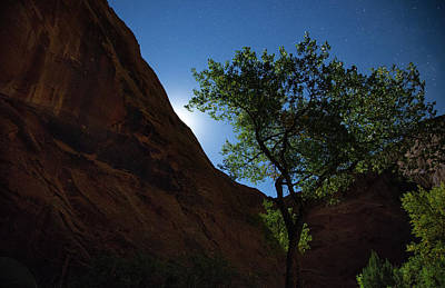 Photograph - Stars Moon And Trees by Kunal Mehra