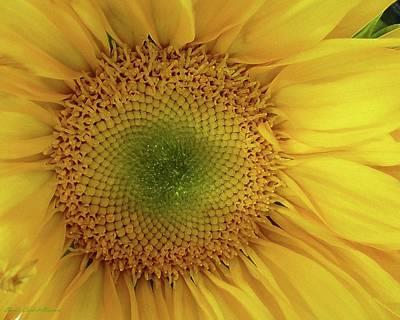 Photograph - Starshine Sunflower by Barbie Corbett-Newmin