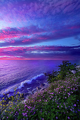 Photograph - Start Again At Your Beginnings by Phil Koch