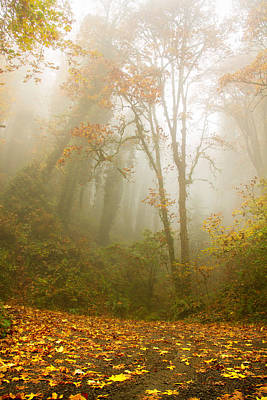 Photograph - Start Of Autumn Dreams by Kunal Mehra