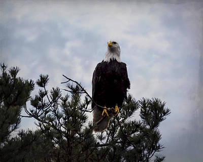 Photograph - Starting The Journey - Eagle Art by Jordan Blackstone