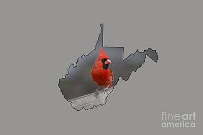 Photograph - State Bird Of West Virginia by Dan Friend