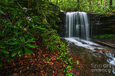 State Flower And Waterfall Art Print by Thomas R Fletcher