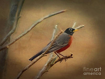 Photograph - Stately American Robin by Sue Melvin