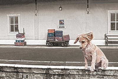Photograph - Station Puppy by Terri Waters