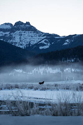Snow Capped Mountains Photograph - Statuesque Moose // Round Prairie, Yellowstone National Park by Nicholas Parker