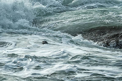 Photograph - Staying Afloat In A World Of Turmoil by Belinda Greb