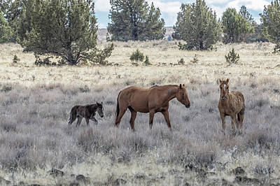 Photograph - Staying Close To Mama by Belinda Greb