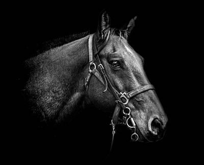 Photograph - Steadfast by Chandler Walker