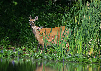 Androscoggin River Photograph - Stealing Mom's Snack by Jan Mulherin