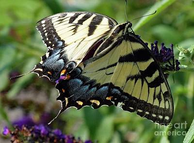 Featured Tapestry Designs - Stealth - Eastern Tiger Swallowtail by Cindy Treger