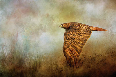 Photograph - Stealthy Hunter Red Tailed Hawk Art by Jai Johnson