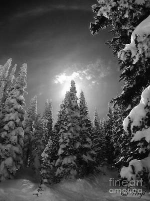 Colorado Ski Art Wall Art - Photograph - Steamboat Springs Back Country by Virginia Furness