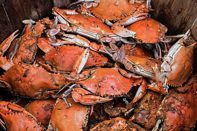 Steamed Crabs Art Print