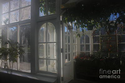 Photograph - Steamy Glasshouse Interior by Nareeta Martin