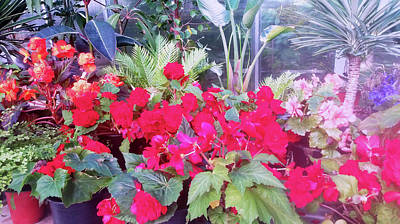 Photograph - Steamy Heat In The Glasshouse by Nareeta Martin