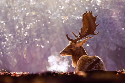 Steamy Stag Art Print by Roeselien Raimond