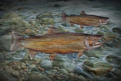 Steelhead Trout Fall Migration Art Print
