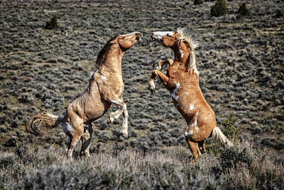 Photograph - Steens Drama by Wes and Dotty Weber