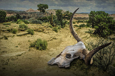 Bleached Tree Photograph - Steer Skull In The Utah Desert by Randall Nyhof
