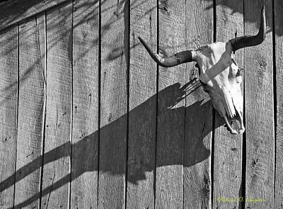 Steer Skull On Barn Art Print by Richard Singleton