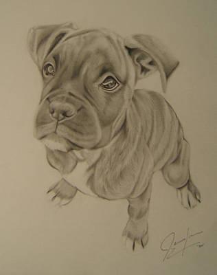 Cute Boxer Drawing - Stella by Jenny Oz