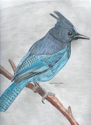Steller Jay Drawing - Stellar's Jay by Don  Gallacher