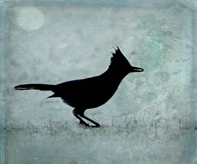 Photograph - Stellar's Jay Silhouette - 365-184 by Inge Riis McDonald